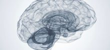 Hjärnan och medvetandet